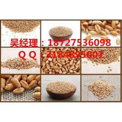 高价收购玉米大豆|玉米大豆|民发养殖(查看)
