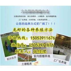 黔南龙虾苗多少钱一斤—龙虾繁育基地