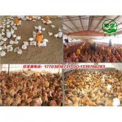 发酵床养鸡用什么牌子的菌种 订货电话多少
