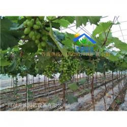 供应-清远实用型农用大棚水帘风机大棚