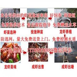 南山)如何养殖小龙虾(小龙虾养殖图片