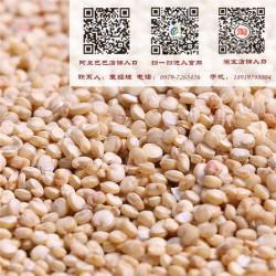 【青海青藜】|青海藜麦源头批发供应商|青海