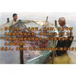 汤阴县虾苗养殖厂@虾苗报价表