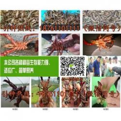 湖南青红龙虾种苗批发小龙虾苗养殖技术指导