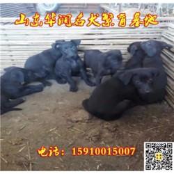 浙江临海有黑狼犬出售吗