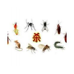 同安灭虫公司——放心的虫害防治公司当属金