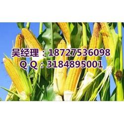 厂家收购玉米大豆_民发养殖_玉米大豆