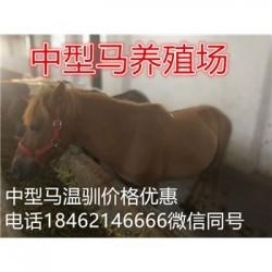 赣州设特兰矮马羊驼养殖场价格