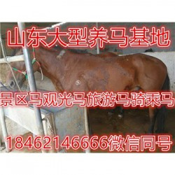 江陵鸵鸟羊驼养殖场价格