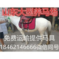 柳州迷你马昊聚养马场效益