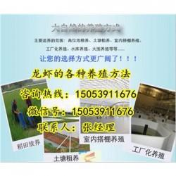 永年县哪里有龙虾苗卖—小龙虾育苗育种基地