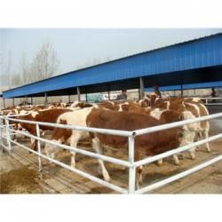 淄博市肉牛崽厂区规划图