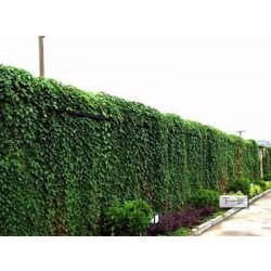 垂直绿化公司属甘肃欣绿源园林景观工程专业