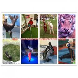 泸州房地产海狮表演出租海狮表演