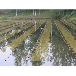纳米石墨烯光催化-富营养化蓝藻水体生态修复-石墨烯光催化材料