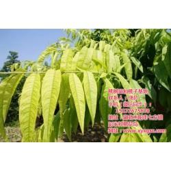 内蒙古桃树苗|枣阳桃花岛|桃树苗买卖