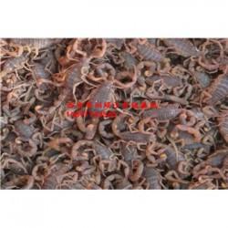 四川西安华润生态蝎子养殖场蝎子养殖价格