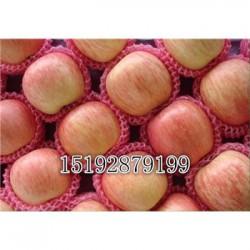 今 日 今年纸袋红富士苹果价格会降价吗?