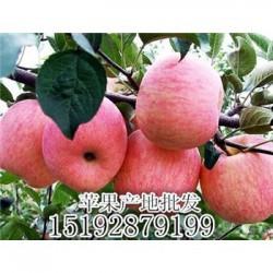 今 日 沂蒙山水晶红富士苹果生产厂家