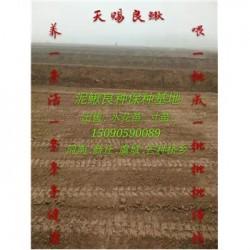长治市养殖一亩泥鳅苗需要多少钱