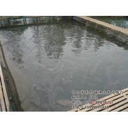 吃鲩鱼|鲩鱼| 中山市渔夫水产(查看)