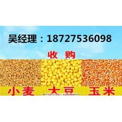 哪里收购玉米大豆,民发养殖,玉米大豆