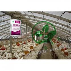 发酵床养鸭哪家菌种质量好 订货电话多少