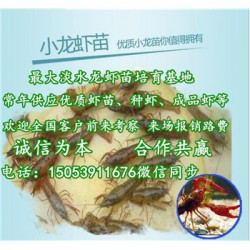 远安县小龙虾指导价格—龙虾种苗报价