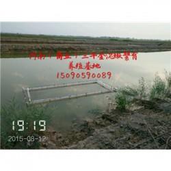 石家庄市泥鳅养殖场