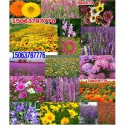 草坪种子种植施工方案草坪种子图片欣赏