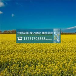 百日草种子价格多少