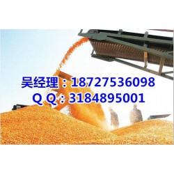 收购玉米_民发养殖_哪里收购玉米价格高