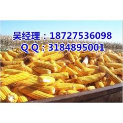 民发养殖(图)|收购玉米大豆的单位|玉米大豆