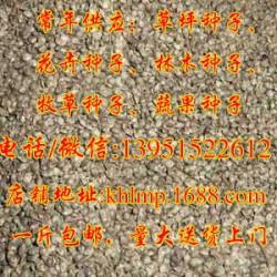 火棘种子、火棘种子的特点、快活林苗木(优